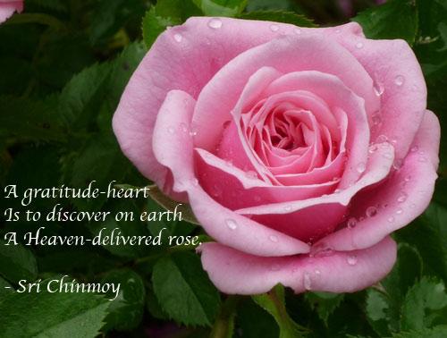 Pink Roses Quotes. QuotesGram